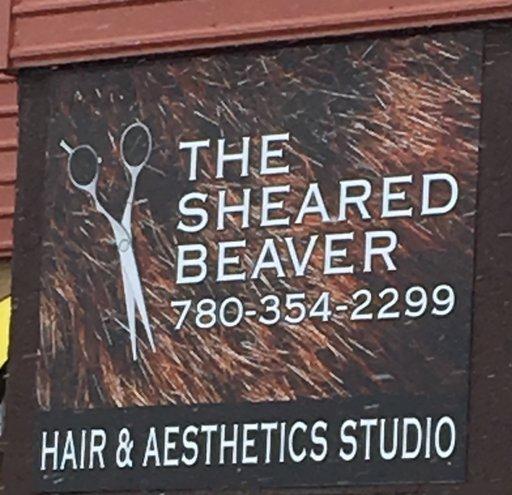 sheared beaver