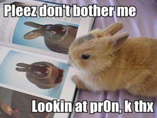 bunny viewing porn