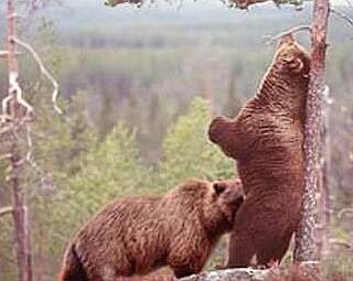 bears enjoying a friendly nibble