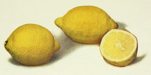 you gotta have lemons if you want to throw a lemon party